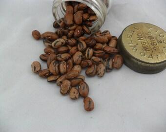 Bean Seeds  ZEBRA Climbing -Heirloom