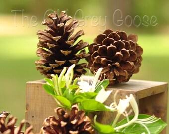 "40 Pine Cones | 2"" - 3"" Natural Pine Cones"