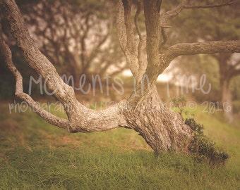 Moments In Time NZ Pohutakawa Tree Background