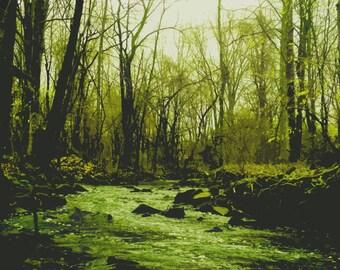 Digital print of forest Art print seasonal