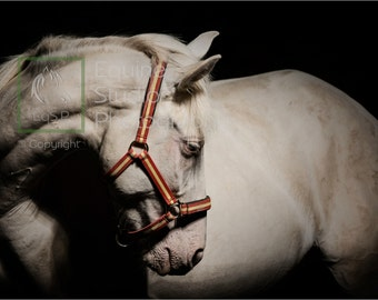 Andalusian with Traditional Head Collar, Fine Art Print, Equine Photography