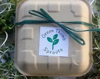 Grow edible broccoli microgreens - custom - microgreens sprouts - homegrown