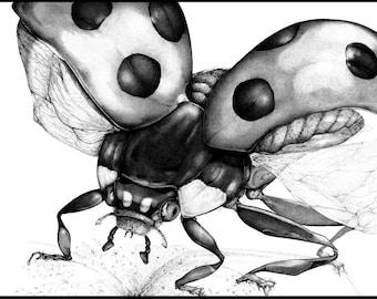 Ladybug - Fine Art Print