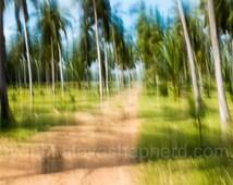Palm Forest -  large fine art photography print, big, nature, blur, forest, trees, landscape, coconuts, green, blue, Australia
