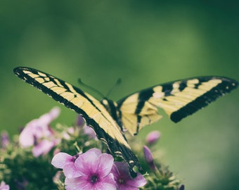 Nature photography print, flower photography, floral photography, nature decor, butterfly photography, butterfly wings