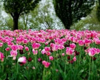 backdrop Garden of Flores