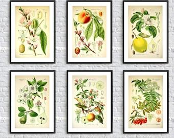Fruit Botanical print wall art print antique wild plants flora nature illustration print wall art decor kitchen home green SET of 6 A4