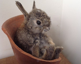 Cute Little Bunny Rabbit ,sitting in a broken Victorian flowerpot