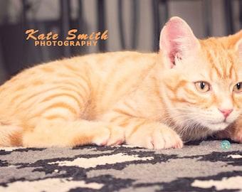 Ginger Kitty Cat