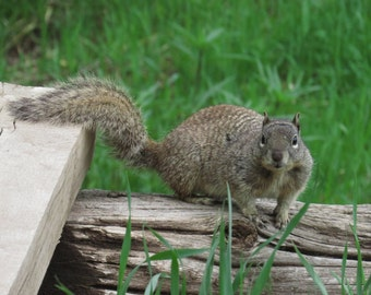Wild Squirrel, Original Photography, Taken in la Veta, Colorado