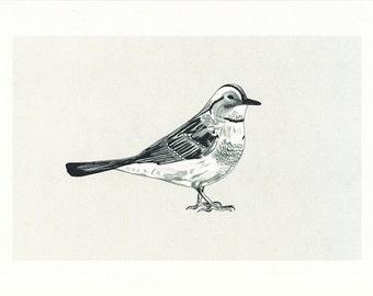 Bird - illustration A4