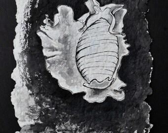 Original watercolor - Conch Shell