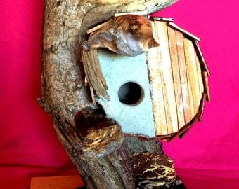 Buttercup Nest Bird House by Sonoran Art, Hobbit Style Whisical & Sweet
