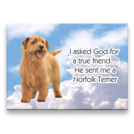 Norfolk Terrier True Friend Fridge Magnet