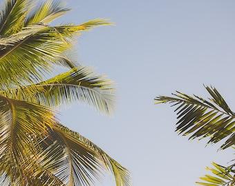 Palmtree & Sky  – Photographic print