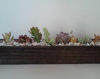 18 inch beautiful succulent planter