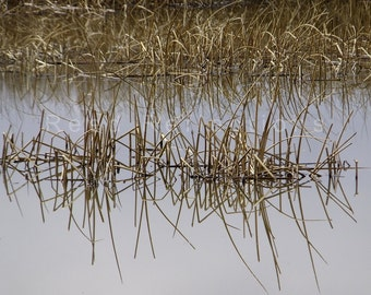 Reed Reflections #4