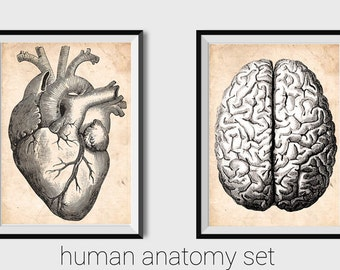 Human Anatomy Print Anatomy Poster Anatomical Heart Printable Heart anatomy Anatomical Brain Anatomy Brain Wall art Science Cardiology