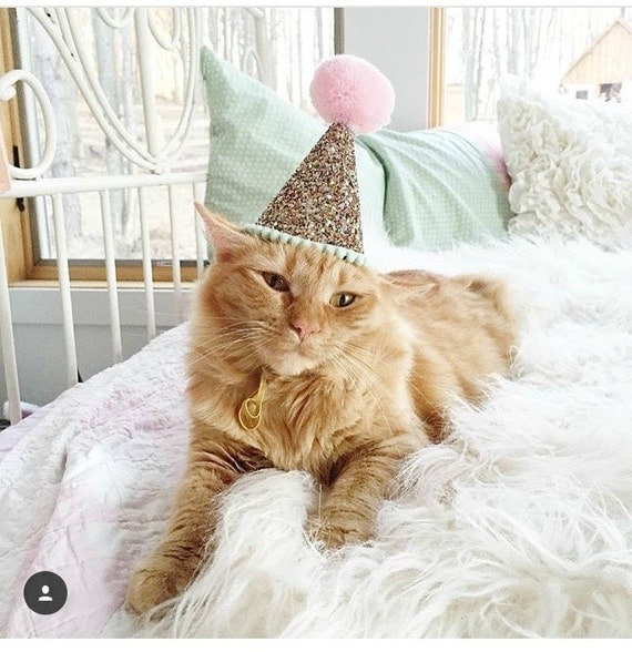 Animal Party Hat || Pet Party || Pet Toys || Dog Clothes || Pet Birthday Party || Dog Lover Gift || Cat Collar || Cat Costume