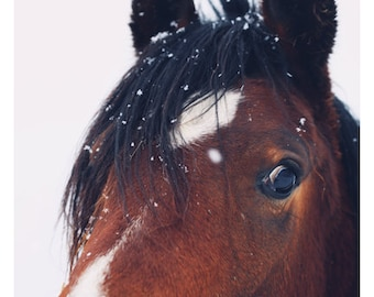 Horse Photograph - Nature Photography - Stormy - Horse Art - Equestrian - Modern Art - Alicia Bock - Oversize Art - Animal - Brown - Winter