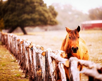 Horse Photography, Texas Hill Country, Animal Photo, Equine, Gift for Horse Lovers, Ranching, Cowboy Photography, Rural, Countryside, fence