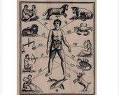rubber stamp Zodiac Diagram  19961 stamping supplies scrapbook stamps stamping