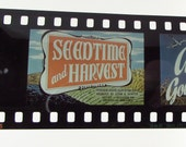 Vintage Filmstrip - Parables - Seedtime and Harvest - Film Strip - 35mm film - Christianity - Religion - Sunday School - metal container