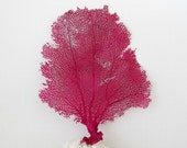 Sea Fan,Real Natural Sea Fan, Raspberry Fuchsia Pink, Sea Fan Coral for Framing, Beach Coastal Decor, Wall Art Seafan,sea fan to frame