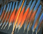 Scarlet Macaw Tail feathers, from the sides of tail,headdress accent feathers #1