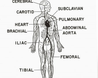 1961 Courtroom Anatomy Witness Poster   Small Poster to Hand Witness    Arterial Circulation