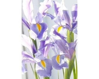 Iris Flower Photography Still Life Art Iris Floral Wall Art Purple Wall Decor
