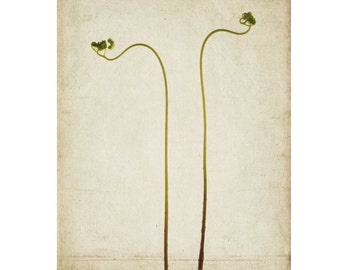 Maidenhair Fern Art Print,  Woodland Wall Decor, Nature Print, Botanical Art, Rustic Decor, Forest Decor, Cottage Chic