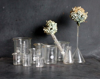 Collection of Science Beakers, Vintage Set of Eight Various Glass Cups for Vases, Planters, Air Plant Holders, Weird Science, Mid Century