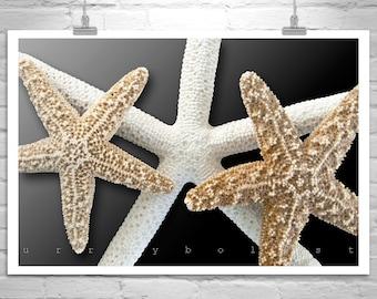 Bathroom Art, Seashell Picture, Bath Decor, Starfish Art, Bath Art, Neutral Tones, Starfish Photograph, Wall Art Print, MurrayBolesta