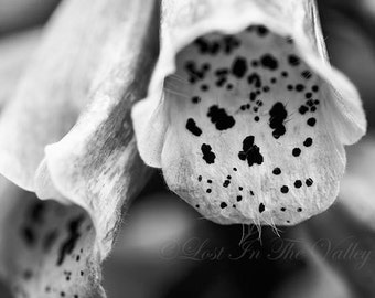 Foxglove Photograph, Floral Wall Decor, Fine Art Photography, Flower Photo, Nature Print, Summer Garden, Monochromatic, Black, White, Grey