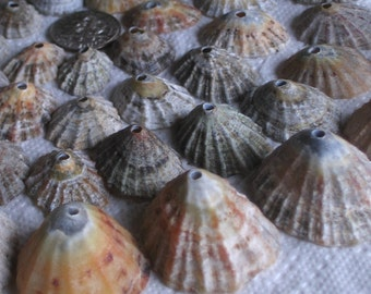 50 Sea Shells Dangles Centre Drilled 2mm holes Craft Supplies (1749)