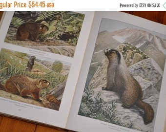 MAYFAIRSALE 200 Color Plates/Wild Animals of North America/National Geographic Reference Book/First Edition 1918/Naturalists Book with Illus
