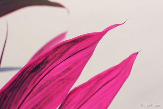Flower Photography, Hot Pink Cordyline, Fuschia Botanical Print, Bright Pink Leaf Photo, Minimalist Color Horizontal Print Tropical Decor