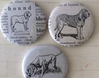 Bloodhound Vintage Dictionary Magnet Set of 3