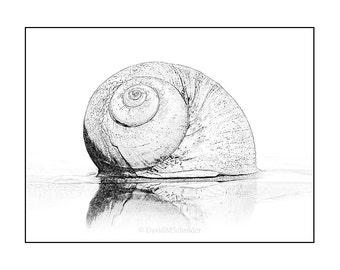 Seashell Download, Seashell Art, Seashell Print, Seashell Drawing, Line Drawing, Black and White, Printable Art, Seashell Graphic, Seashell