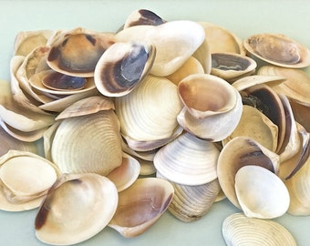 "Seashells - 1 c. Shells - 1/2"" - 3/4"" in Shades of Ivory, Tan and Purple - craft shells/wedding shells/bulk shells"