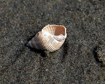 Seashell Photo - Beach House Wall Art - Beach Decor - Shell Art - Shell Photos - Seashell Decor