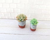Earthquake Italy Aid - Modern succulents Echeveria for dollhouse in 1:12 scale