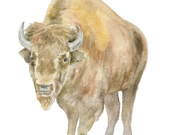 Bison Watercolor Painting 5x7 Giclee Print Reproduction - Western Art Cattle Buffalo Ranch