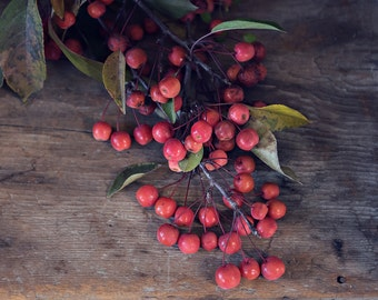 ornamental crab berries-nature photography -berry photo-Christmas photography (5 x 7 Original fine art photography prints) FREE Shipping)