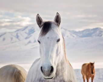 Rustic Horse Photograph, Winter art in Color