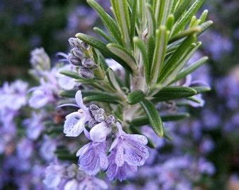 Rosemary Essential Oil, 15 ml