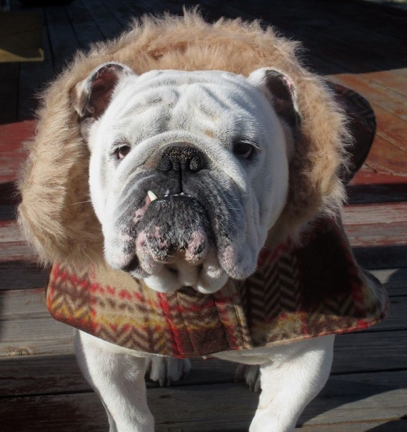 ENGLISH BULLDOG Reversible Coat,Fleece,Fall, winter dog coat, Ski wear, Brown,Tan, , Reversible Bulldog coat, dog coat