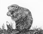 Original Pencil Drawing - Beaver 35