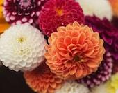 A Bouquet of Dahlias - Fine Art Photograph, flowers, garden, nature, autumnal, red, crimson, gold, purple, burgundy, floral arrangement